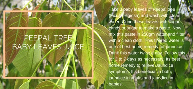 Jaundice Symptoms Causes And Treatment Traditional Medicine - Best home remedies for jaundice its causes and symptoms
