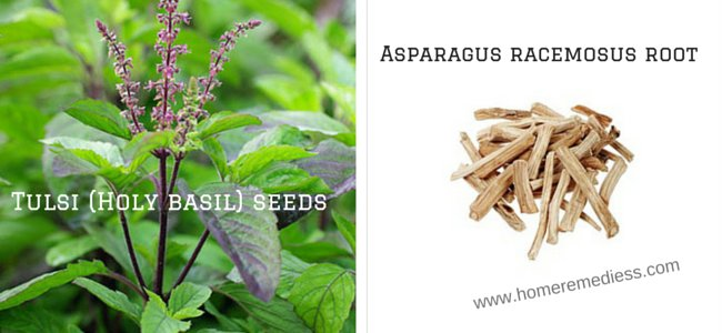 Tulsi holy basil Best ayurvedic medicine for vigour and vitality