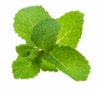 mint leaves for Tonsils