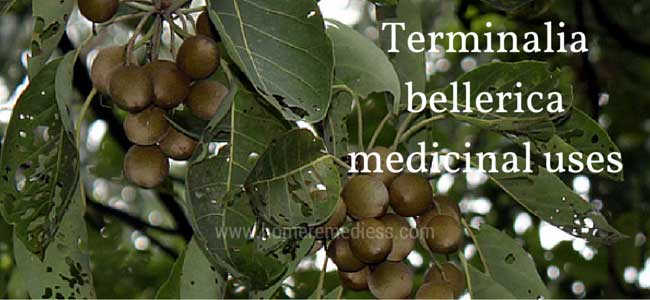Terminalia bellerica medicinal uses and pictures